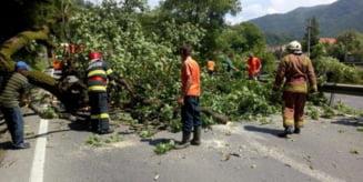 Copac cazut pe DN 15, in Rastolita