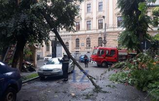 Copac cazut peste masini langa Penitenciarul Satu Mare (Foto)