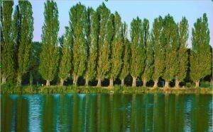 Copacii, ca oamenii: au memoria experientelor personale