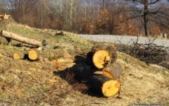 Copacii de pe marginea a doua sosele din Hunedoara vor fi taiati si vanduti