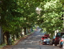 Copacii din orase valoreaza milioane