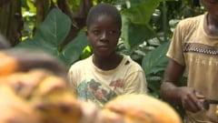 Copiii sclavi ai ciocolatei, fara sa stie ce este sau ce aroma are