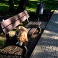 Copil muscat de un maidanez in parcul IOR din Capitala