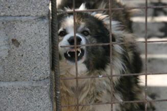 Copil ucis de caini in Bucuresti: Ontanu se spala pe maini