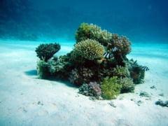 Coralii, amenintati cu disparitia in insulele franceze din Oceanul Indian