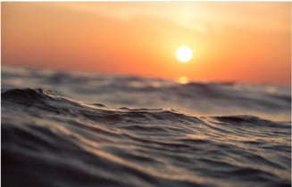 Creaturile din oceane ne protejeaza de virusuri dintotdeauna. Iata ce eficiente sunt!