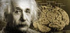 Creierul lui Einstein vs. creierul omului normal. Un studiu recent arata diferenta