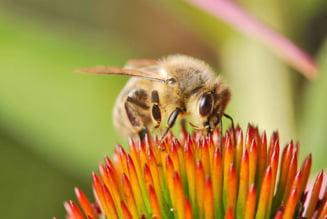 Criza albinelor, un pericol nebanuit pentru planeta