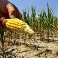 Criza alimentara mondiala? Nu inca, spun reprezentantii FMI si BM