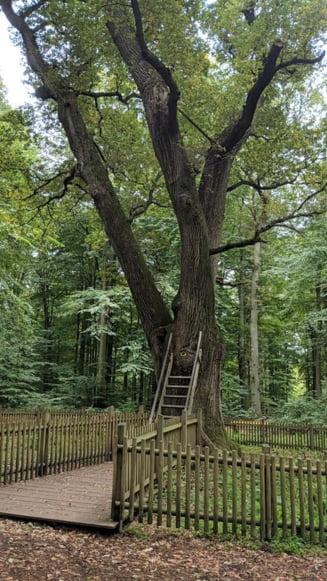 Cu mult inainte de Tinder sau alte site-uri de dating, un copac slujea drept petitor