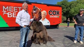 Cu ursul in campanie! Un politician american se plimba cu un animal de jumatate de tona VIDEO