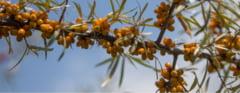 Cultiva de 13 ani catina bio si a fost curtat si de elvetieni: Nu m-am imbogatit, dar oamenii se bucura de produsele mele (Video)