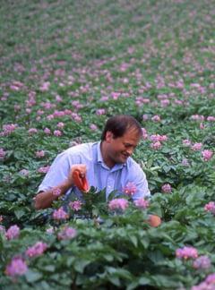 Cultivatorul de cartofi devenit multimilionar