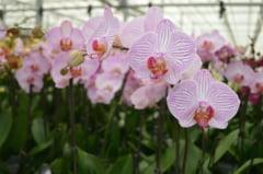 "Cum arata ""cea mai urata orhidee din lume"", una dintre noile specii denumite in 2020"