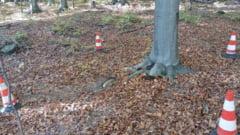 Cum au salvat pirotehnistii bacauani un copac cu bomba la radacina