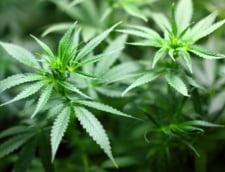 Cum este afectat vocabularul de consumul de marijuana