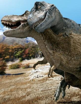 Cum faceau sex dinozaurii si alte detalii interesante (Video)