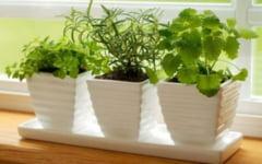 Cum iti transformi bucataria intr-o gradina cu plante medicinale. Cele mai aromate plante de pe pervaz