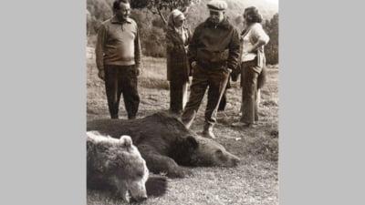 Cum l-a ucis Ceausescu pe Lache, ursul urias din Poiana Brasov. Punctajul primit de dictator reprezinta inca recordul mondial