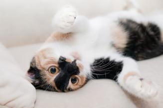 """Cum le spun pisicile """"te iubesc"""" stapanilor lor. Metode prin care poti descifra ce-ti transmite animalul de companie"""