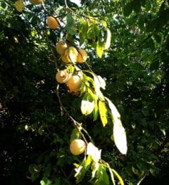 Cum mancam in mod corect fructele - de ce nu sunt bune fresh-urile