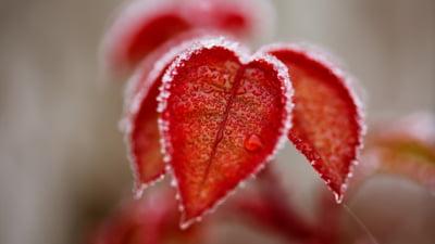 Cum ne protejăm plantele din grădină de îngheț, odată cu răcirea vremii. Principalele măsuri pentru prevenirea riscurilor