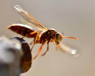 Cum poate o viespe sa provoace prabusirea unui avion
