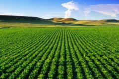 Cum poate un program software sa creasca productia agricola