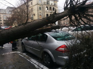 Cum poti sa castigi procesele cu administratia locala, daca un copac aflat pe domeniul public ti-a cazut pe masina