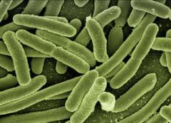 """Cum putem preveni raspandirea germenilor. Obiectele pe care """"prospera"""" cele mai multe bacterii"""
