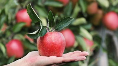 Cum să tai corect pomii fructiferi toamna. 6 sfaturi esențiale