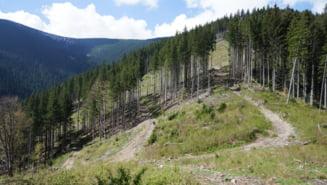 Cum sa furi 5.000 de hectare de padure in Romania
