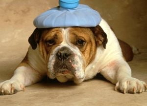 Cum sa scapi de durerile de cap, fara pastile