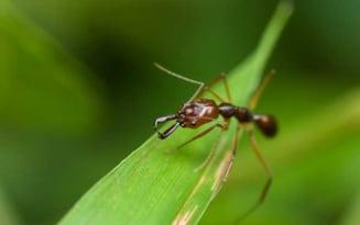 """Cum scapam de furnicile din casa: """"Am intalnit oameni care au spalat pe jos cu Domestos si tot n-au reusit"""". Substantele cu adevarat eficiente"""