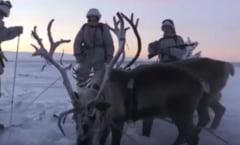 Cum se antreneaza armata Rusiei cu reni si caini Husky la -30 de grade (Video)