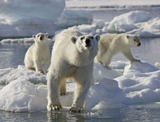 Cum se distreaza bogatii din China - vanatoare de ursi polari in Canada