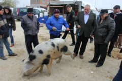 Cum si-a facut Nicusor Constantinescu reclama in presa pe banii constantenilor