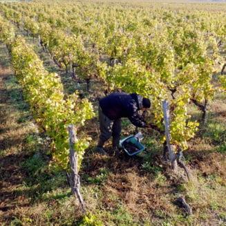 Cum va evolua pretul vinului in aceasta toamna. Masura impusa de Uniunea Europeana pentru sectorul vitivinicol