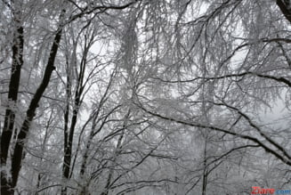 Cum va fi vremea de Craciun - prognoza meteo pe doua saptamani