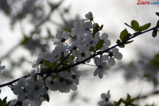 Cum va fi vremea de Florii si Paste - prognoza meteo pentru 2 saptamani