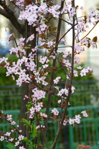 Cum va fi vremea de Florii si de Paste - prognoza meteo pentru doua saptamani