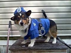 Cum va functiona politia animalelor: Un inspector pentru fiecare judet si 8 pentru Capitala