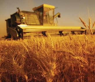 Cum vor sa investeasca arabii in agricultura romaneasca