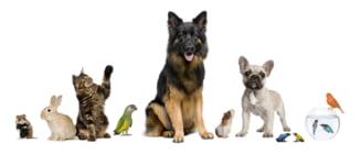 Cumpara accesorii dintr-un petshop online, gasesti de toate pentru animalul tau de companie!