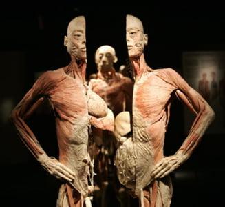 Curiozitati ale corpului uman
