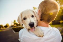 Curiozitati despre caini. Care este populatia canina a Pamantului