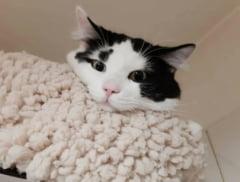 Curiozitati la pisici. Mitul foarte popular dar total eronat deprins de oameni din povesti