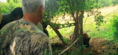 DAMBOVITA: Urs prins intr-un gard in apropierea scolii din Bezdead! Copiii au fost tinuti in clase