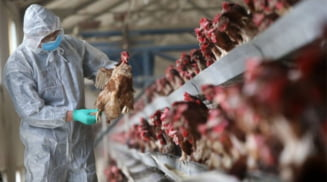 DSVSA impune masuri crescatorilor de pasari din judetul Olt, pentru a preveni aparitia gripei aviare