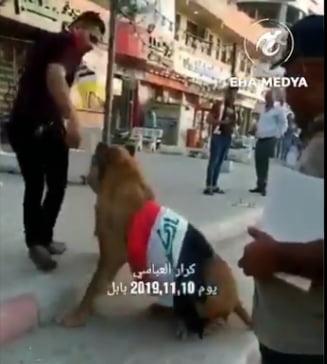 Daca Politia aduce caini, un tanar s-a dus la protest cu ... leul (Video)